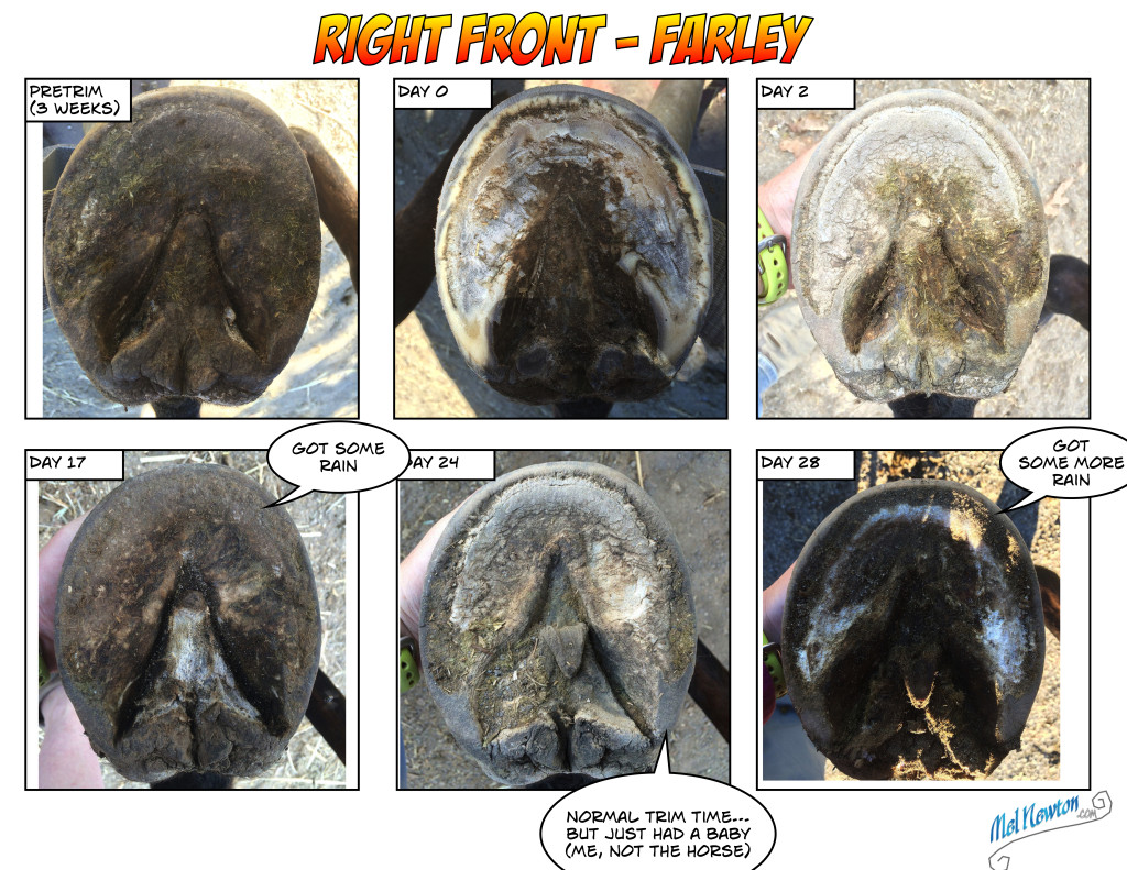Temporal Hoof project - RF Fall 2015