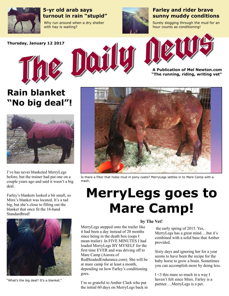merrylegs-jan-17-mare-camp