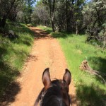 ML's first conditioning ride
